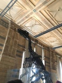 Iguanodon (Ig-wha-noh-don)